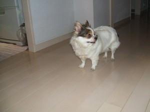 犬15jan16